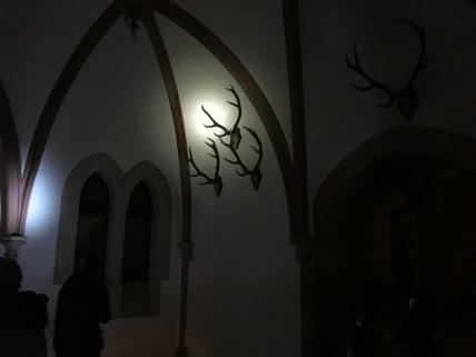 Das Taschenlampenlicht verleiht den Details einen besonderen Zauber, wie hier bei diesen Geweihen ...