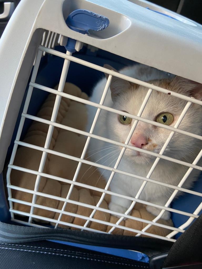 Weißblaue Katzentransportkiste mit weißer Gittertür. Hinter der Tür: Auf einem sandfarbenen Kissen hockt ein weißer Kater mit wenigen roten Abzeichen und schaut durch die Tür.