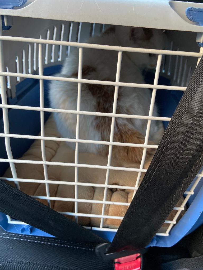Weißblaue Katzentransportkiste mit weißer Gittertür, auf sandfarbenem Kissen ein weißer Kater mit wenigen roten Markierungen, der deem Betrachter beleidigt den Rücken zuwendet.