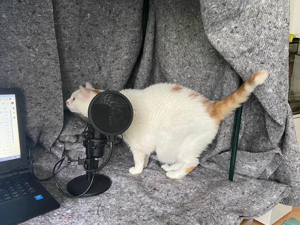 Soundbox aus grauen Umzugsdecken, darin stehen ein Notebook, ein Mikrofon und ein weiß-roter, dicker neugieriger Kater.