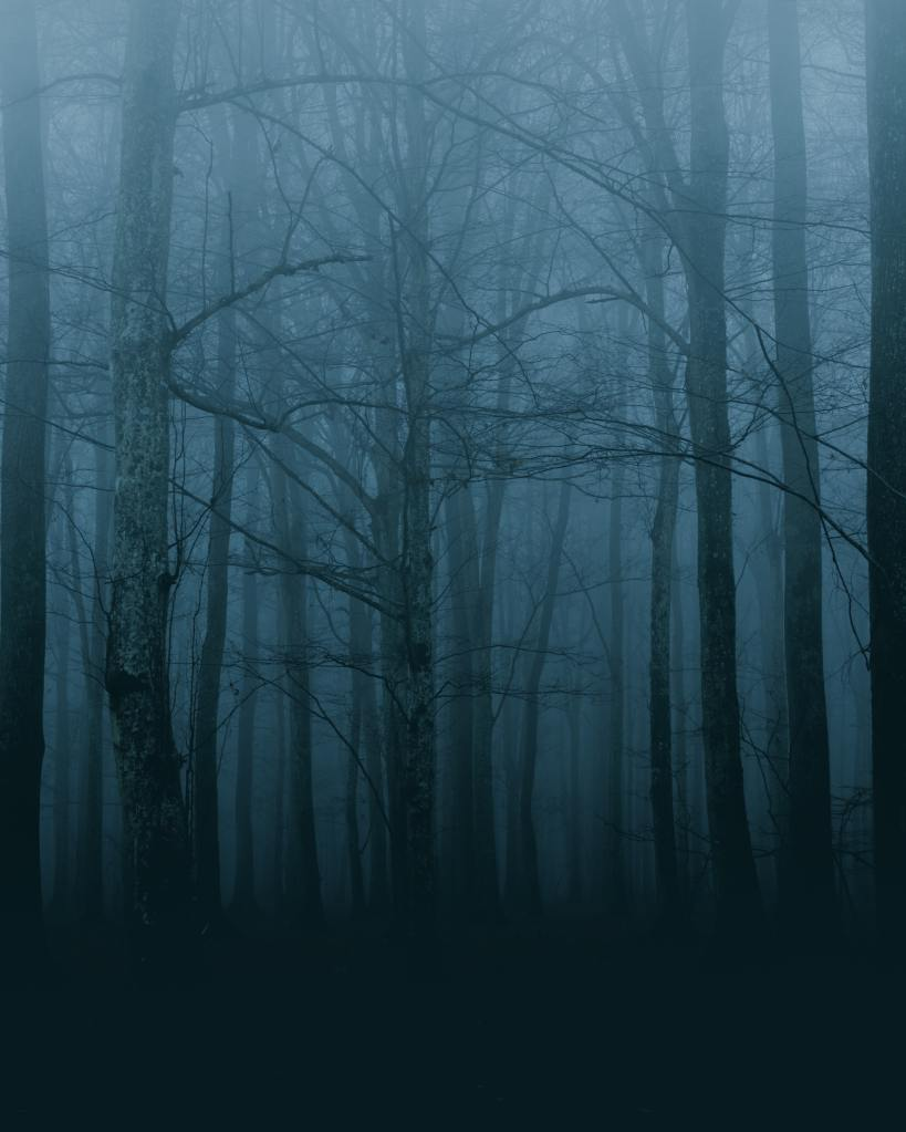 Ein verwachsener Wald mit fein verzweigten Birken und anderen schlanken Bäumen im Nebel, in der späten Abenddämmerung,