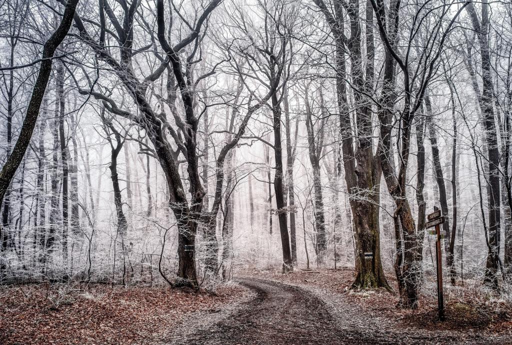 Verschiedene kahle Bäume stehen in einem winterlichen Wald, durch den ein Forstweg führt.